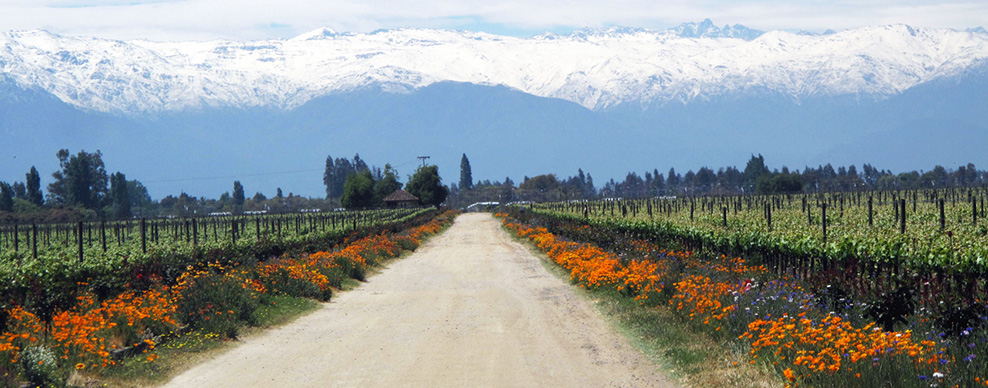 Maipo Valley - Courtesy of De Martino winery